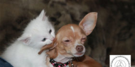 Corso di Fiori di Bach per Animali d'affezione – dal 9 giugno